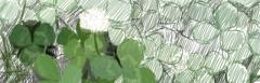 白詰草描き込み過程 1